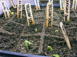 Seedbust